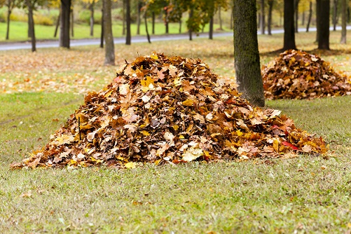fall landscaping cleanup