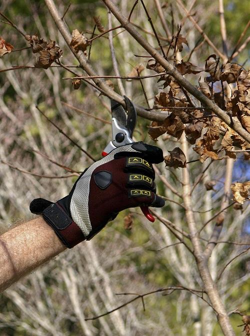 dormant pruning sheers