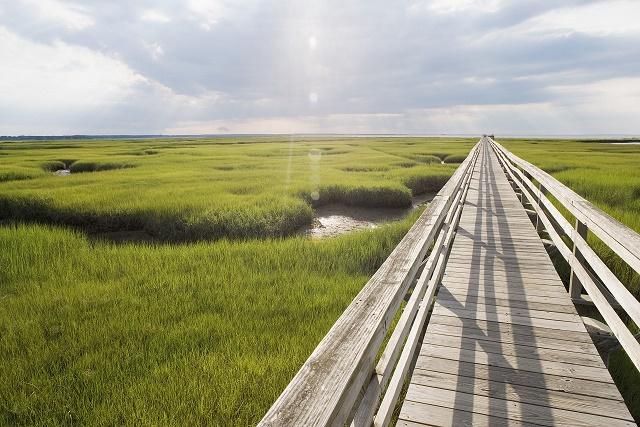 Wetlands upstate ny