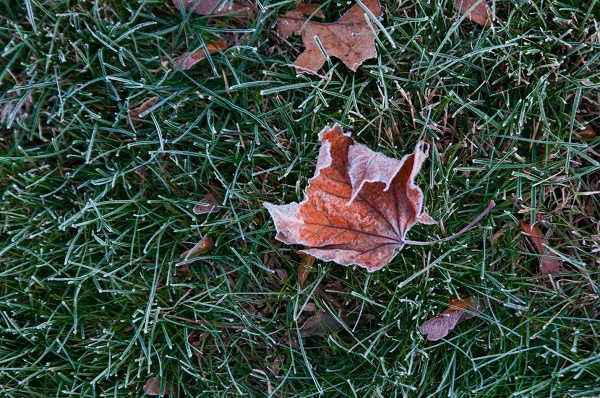 winter landscaping tasks