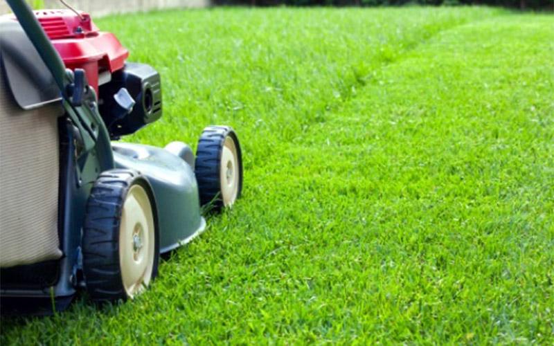 grasshopper gardens lawn mowing