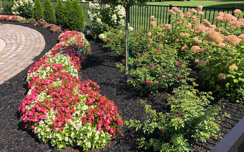 perennial flower bed in saratoga