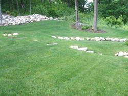 Fertilized trees in lawn with rocks