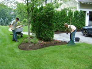 Two men planting flower bed